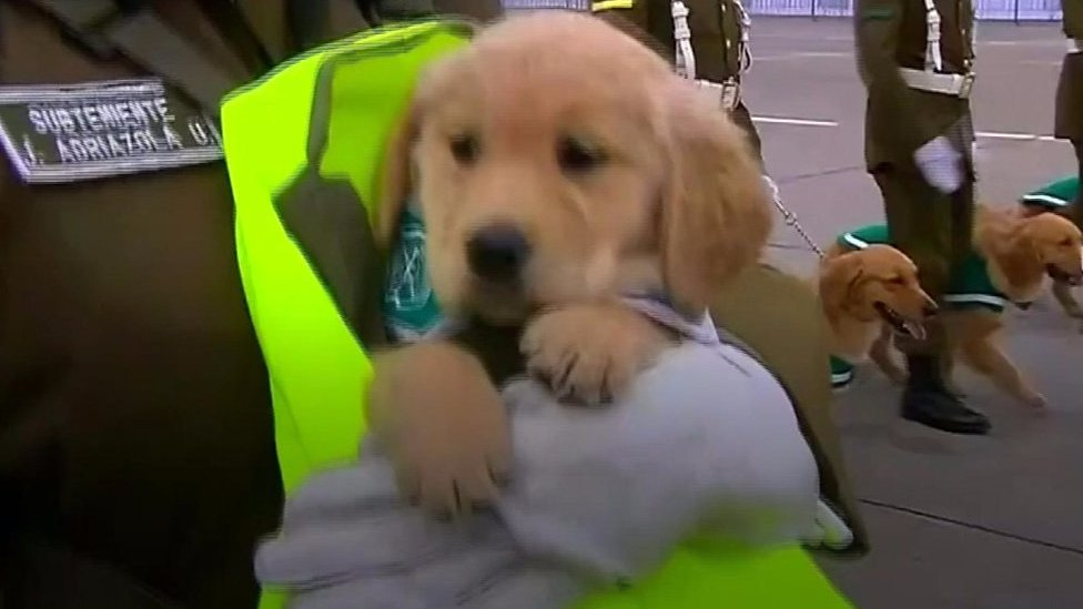 Puppies steal spotlight at Chile military parade