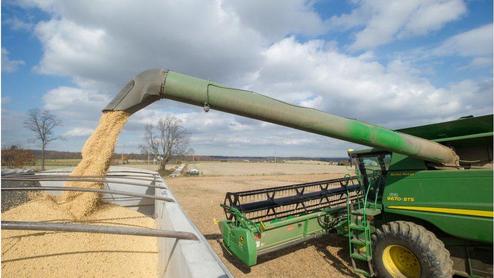 Las granjas de soja han sido fuertemente afectadas por la guerra comercial entre Estados Unidos y China.