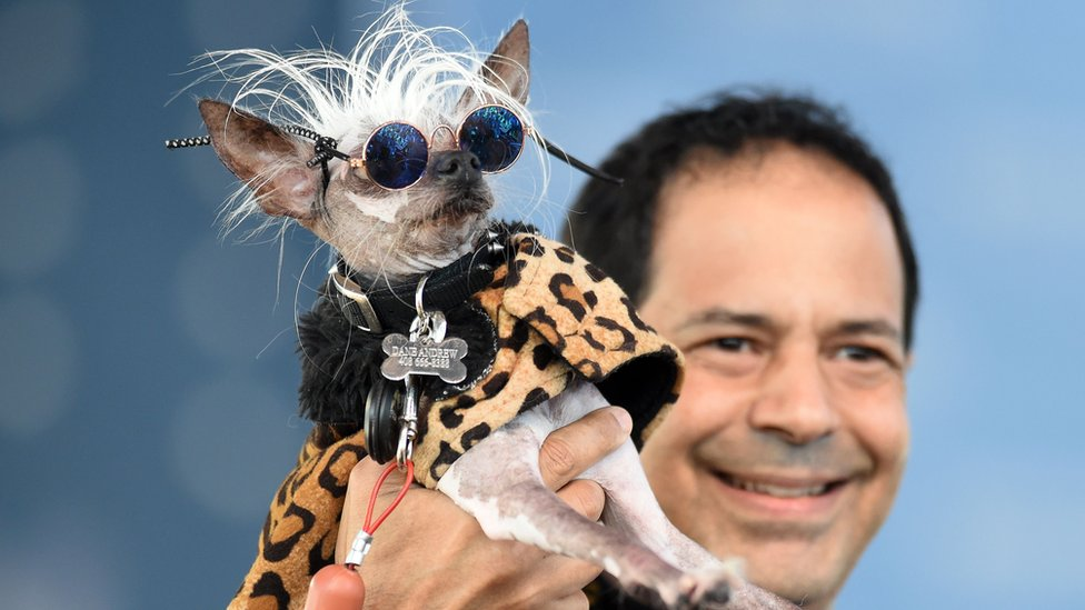 Rascal Deux, a Chinese crested, wears sunglasses while being held up by his owner Dane Andrew