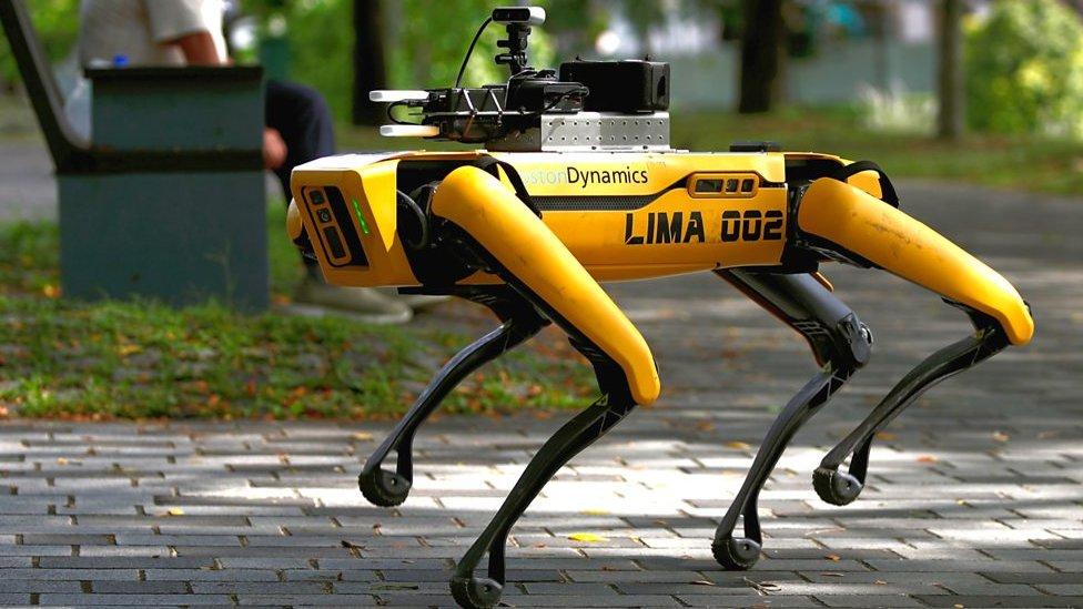 Singapur'da robot köpekler, parklarda devriye geziyor ve halkı sosyal mesafe kurallarına uymaları konusunda uyarıyor.
