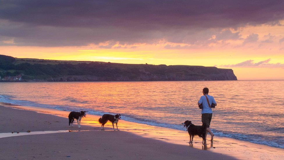A man walking on a beach with three dogs