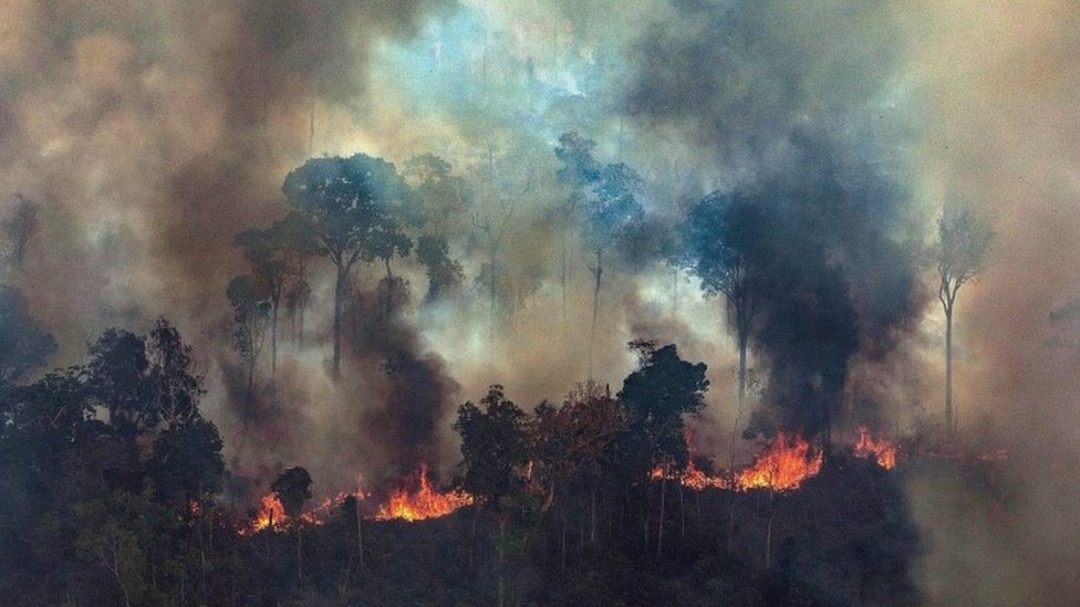 Grinpis Brazil - slika zapaljene šume, avgust 2019.