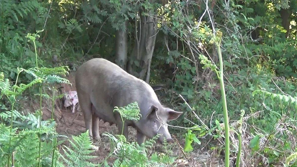 Matilda in the woods