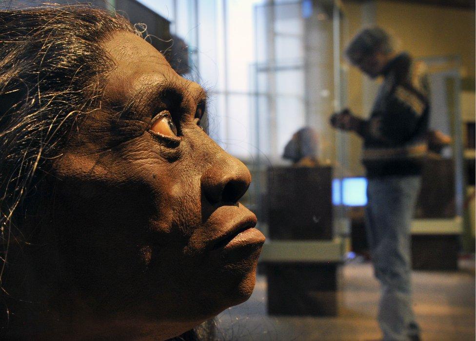 Homo Floresiensis modeli