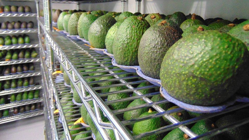 Más del 40% de los desechos de alimentos en EE.UU. son de frutas y verduras.