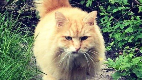 Arrest after Instagram cat Mr Muk stolen from Islington