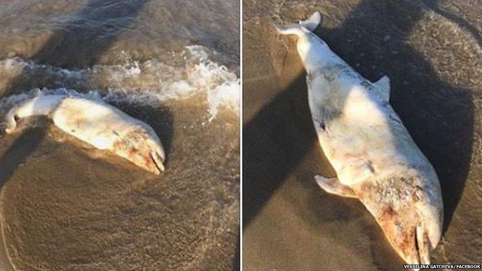 Mrtav delfin na plaži