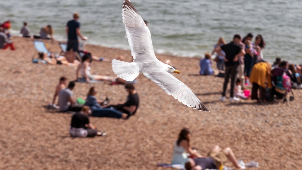 A gull flies over a busy Brighton beach