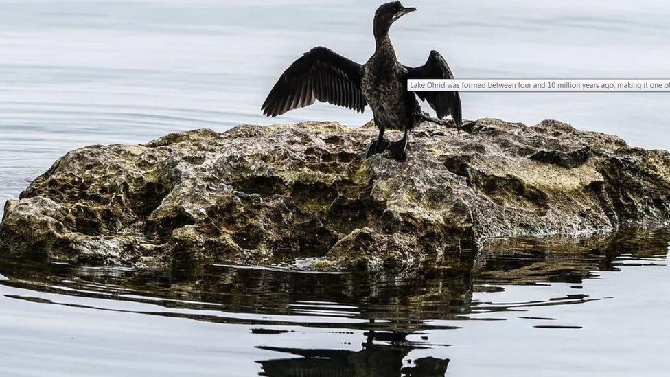 Ptica na Ohridu