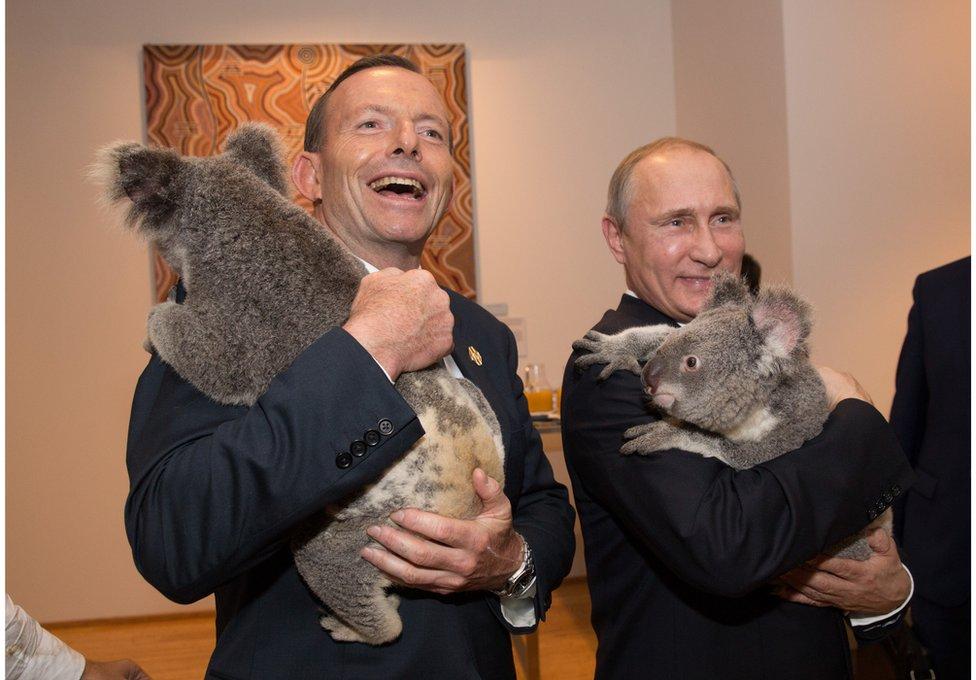 In this handout photo provided by the G20 Australia, Australia's Prime Minister Tony Abbott and Russia's President Vladimir Putin meet Jimbelung the koala before the start of the first G20 meeting on 15 November 2014 in Brisbane, Australia.