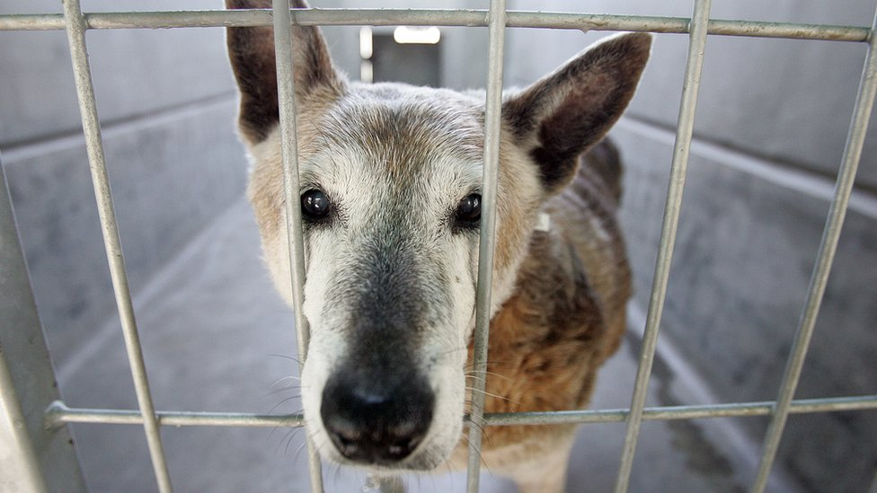 Rescue dog waiting to be re-homed