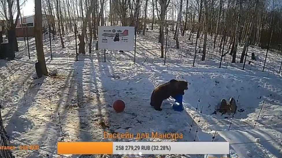 Manser, medved u Rusiji koji živi na aerodromu, 2019.