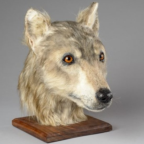 Neolithic dog's head