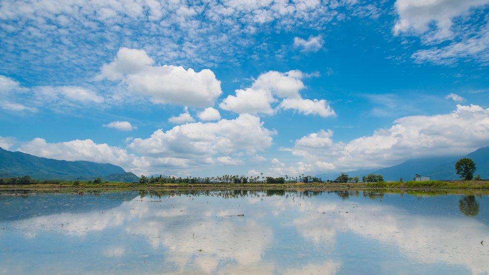 Paisaje en campos de arroz de Taiwán.