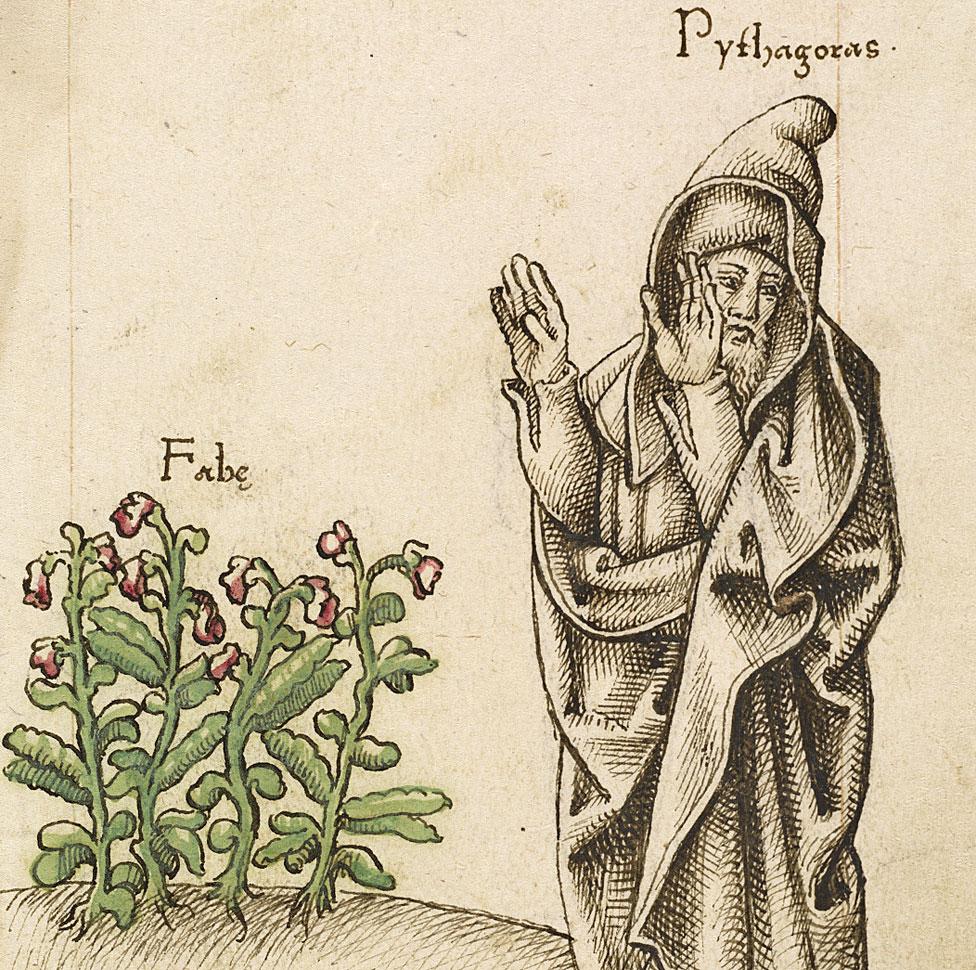 Pitágoras rechazando la planta Vicia faba