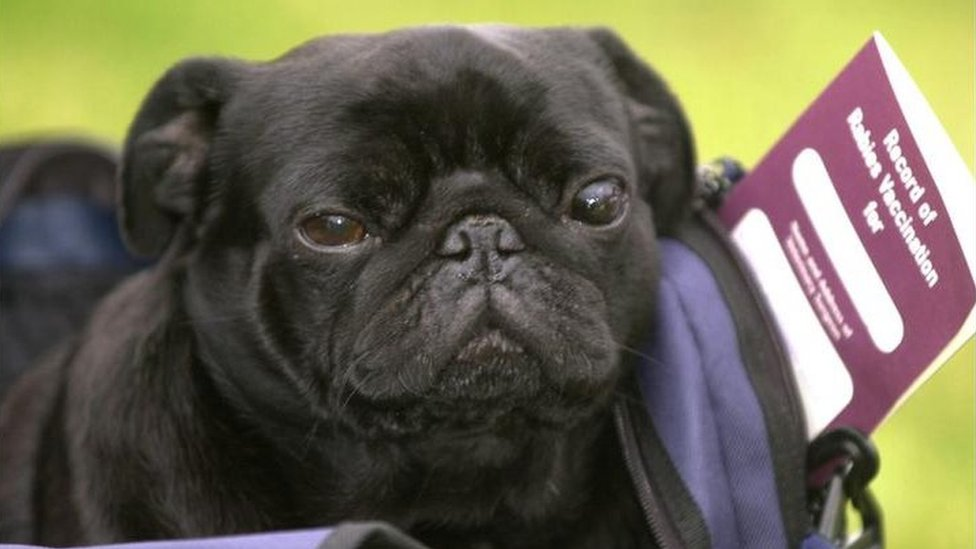 A dog called Frodo Baggins, which was the first to travel to the UK using a pet passport