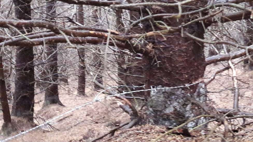 Barbed wire attached to a tree in Ton Pentre
