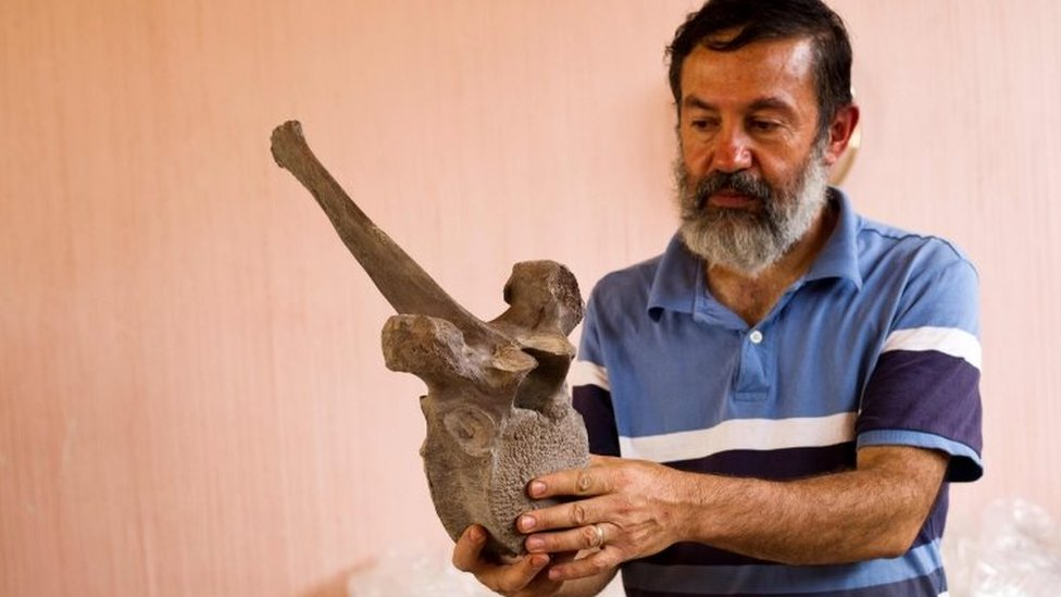 Mexican archaeologist Luis Cordoba shows a vertebra of a mammoth discovered in December 2015 in Tultepec, Mexico on 24 June 2016.