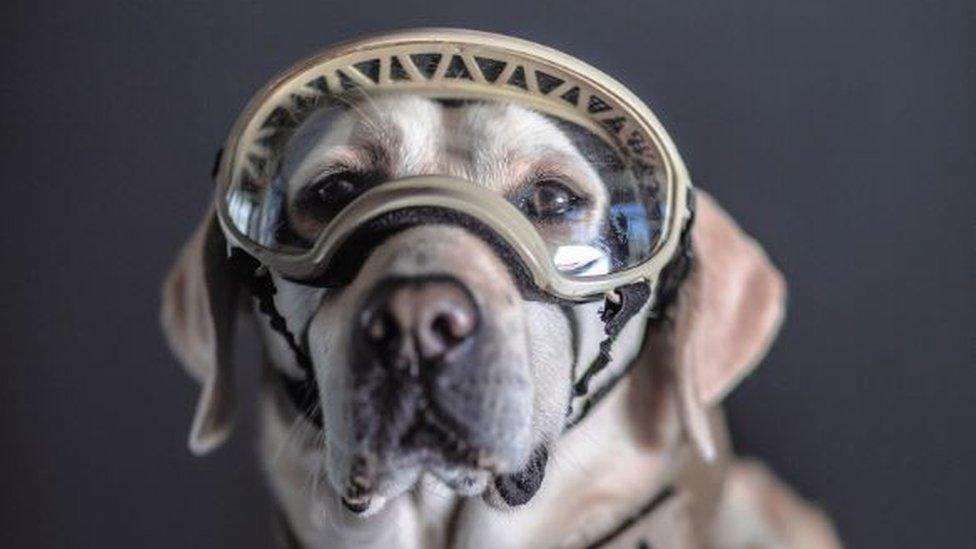 Frida, a Mexican Navy rescue dog, photographed by Santiago Arau