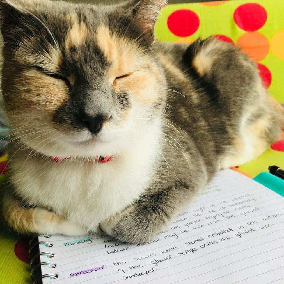 Cat on homework