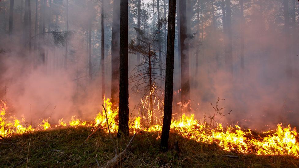 Un incendio se extiende por los bosques de Siberia
