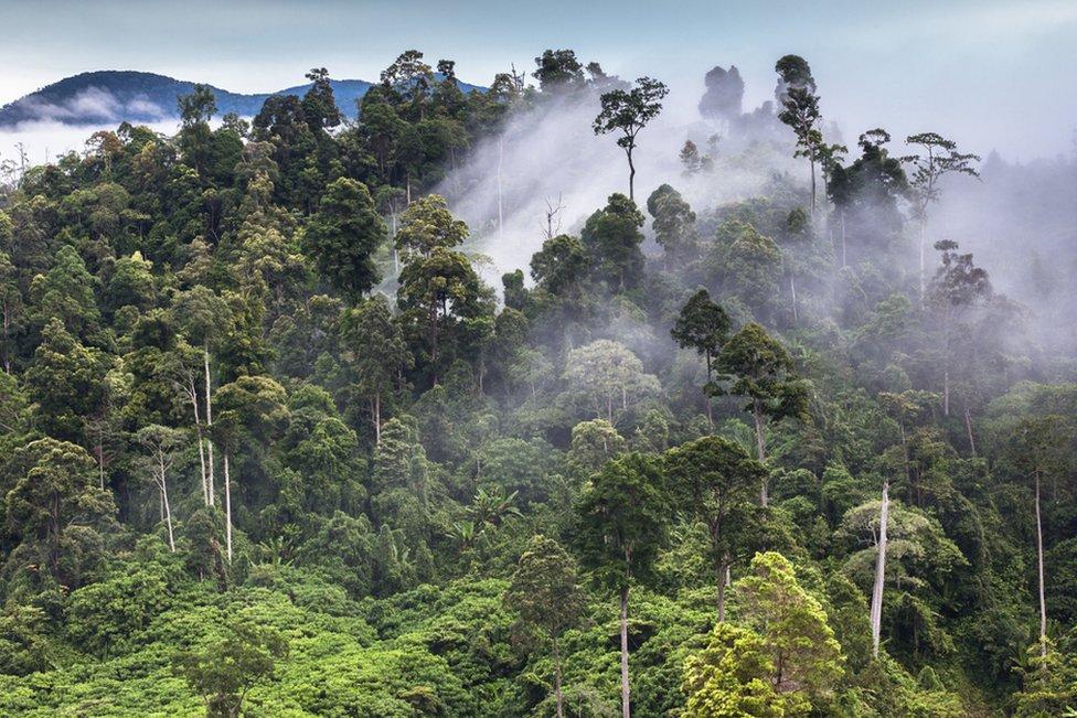 Dawn in the Leuser rainforest, Sumatra.