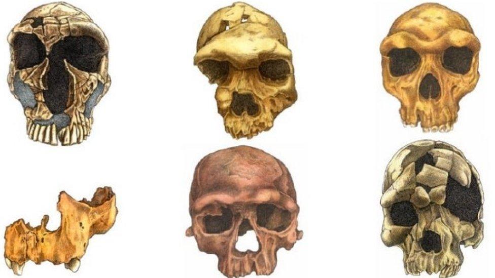 Вчені проаналізували, як змінилося обличчя людини за мільйони років еволюції