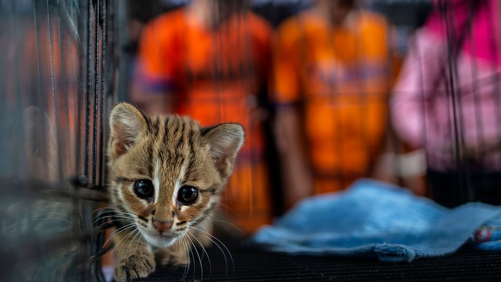 A young animal seized by authorities during an anti-smuggling operation in Surabaya on March 27, 2019