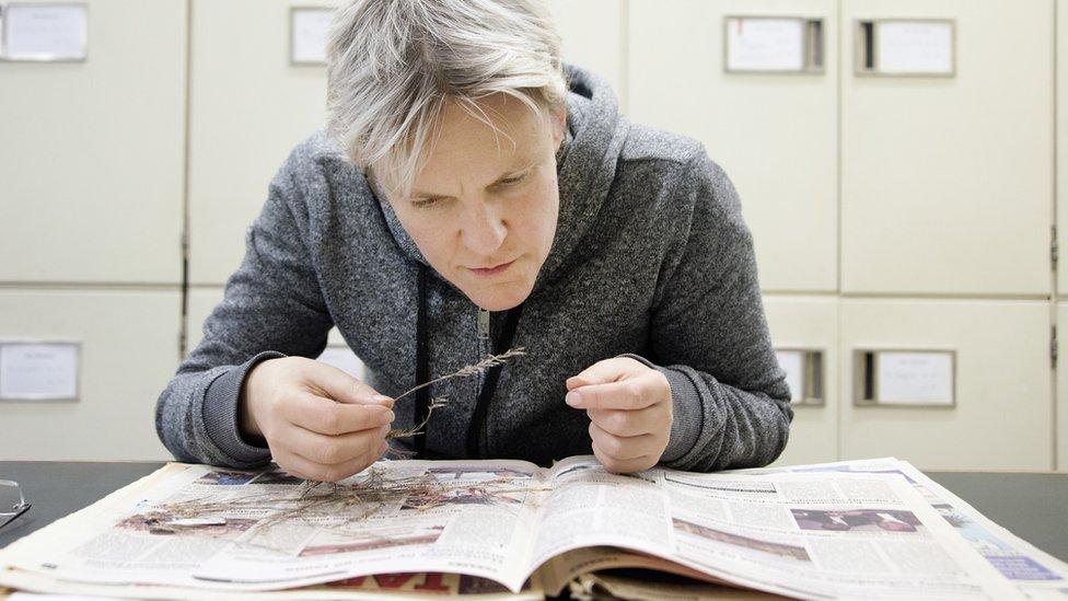 Herbaria preserve specimens of extinct plants