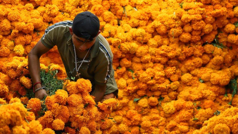 Un hombre con una gran montaña de flores de cempasúchil.