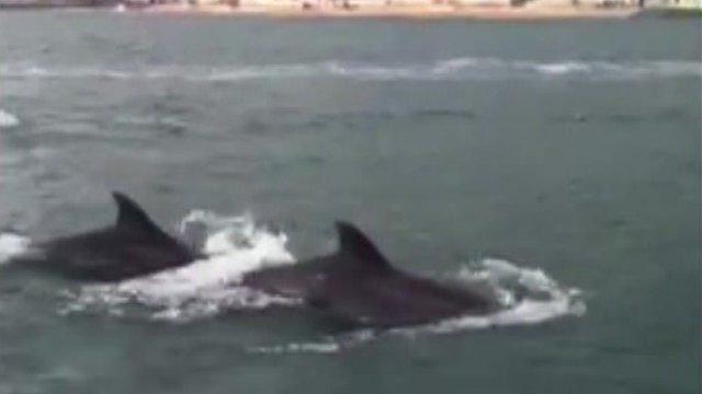 Dolphins filmed by Daisy Blake