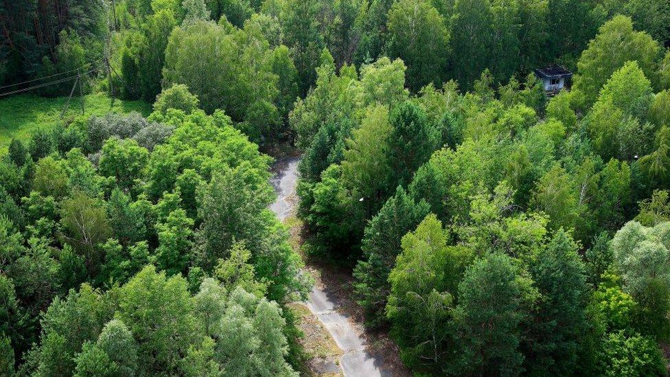 Vegetación en Chernóbil