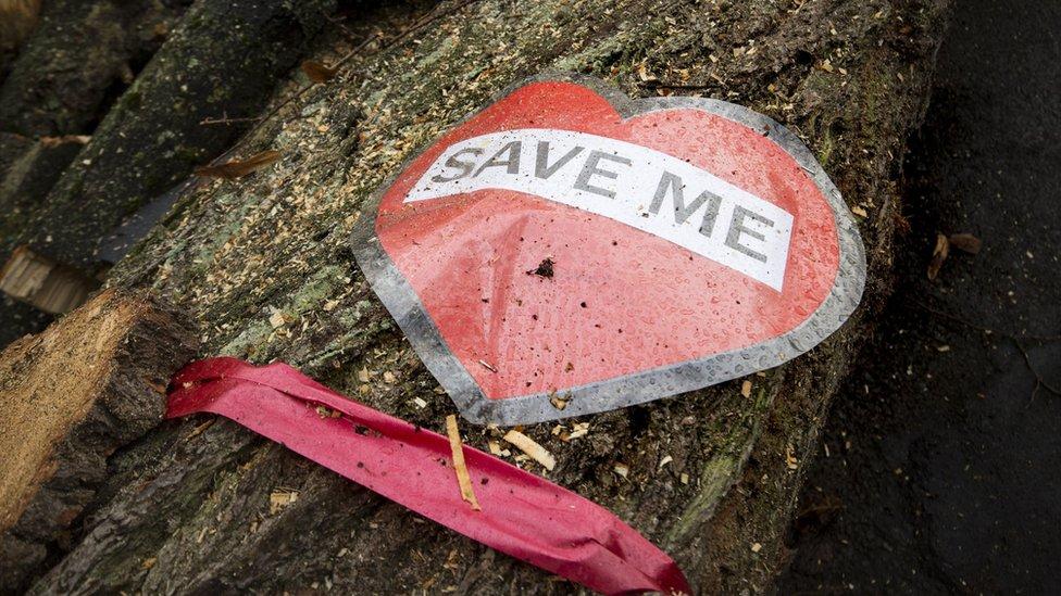 'Save Me' sign on felled tree