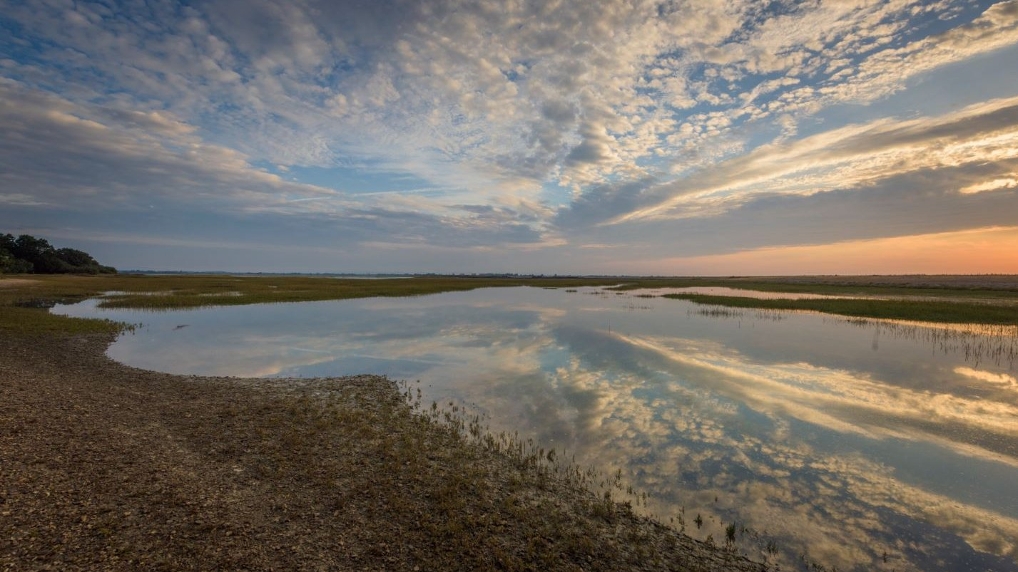British salt marshes 'to disappear' as sea levels rise