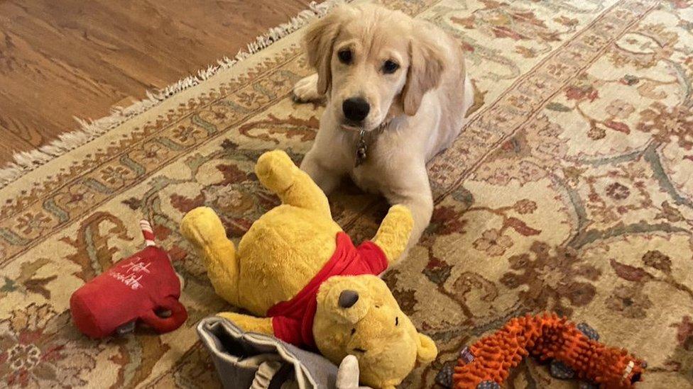 El perro Mercer con varios juguetes