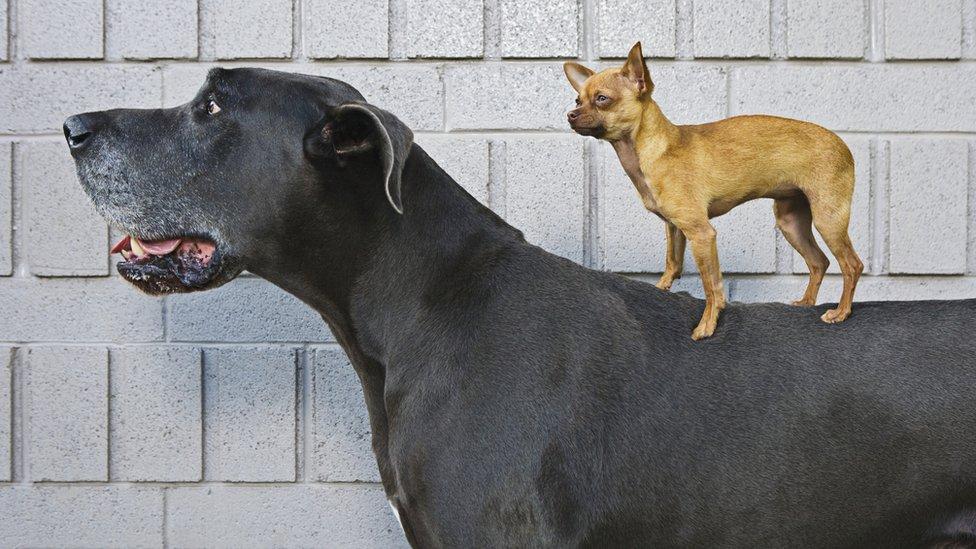大狗與小狗