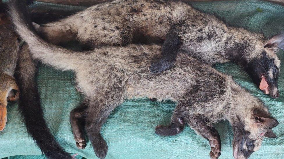حيوانات برية تباع في لاوس