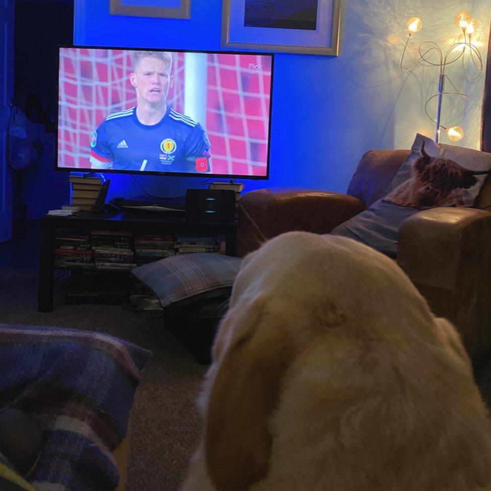 Dog watching football