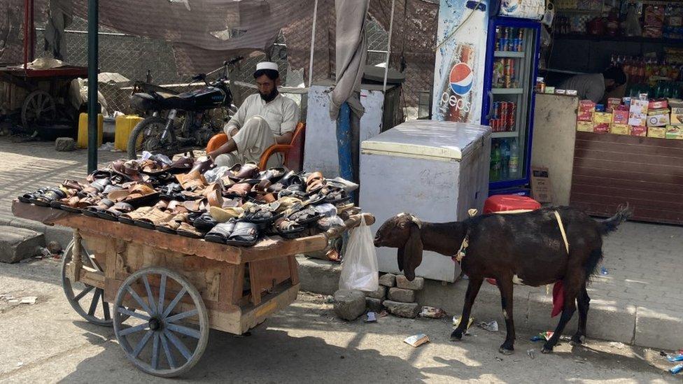 أحذية للبيع على عربة مع ماعز فضولي يقف بجانبها