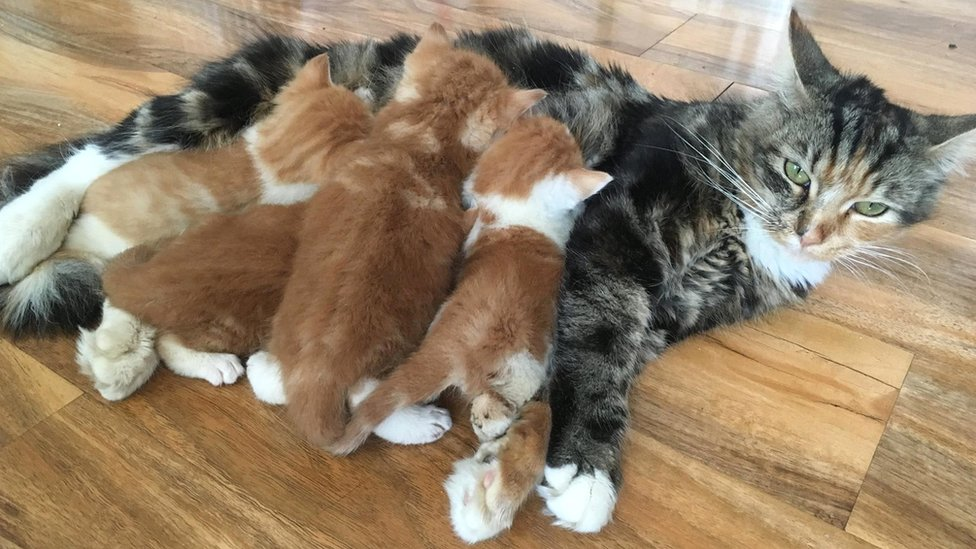 Four kittens with their mother