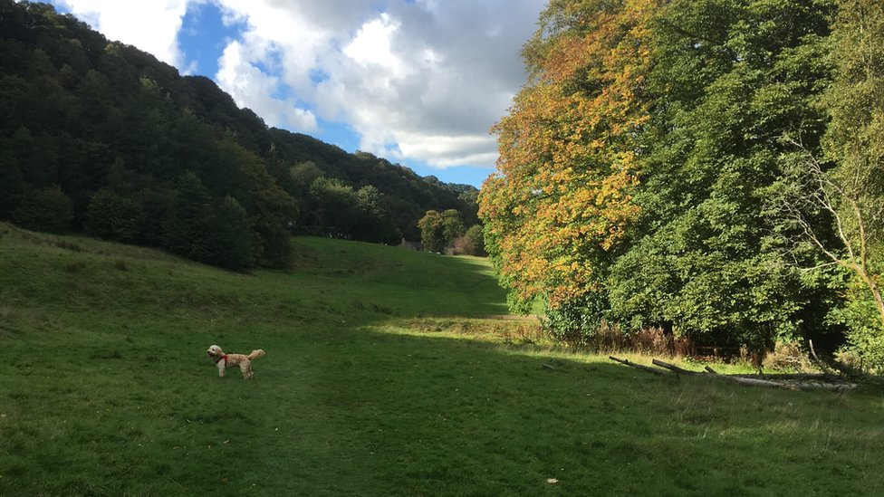 Park and trees, and Heathcliff the cockapoo (Image: BBC)
