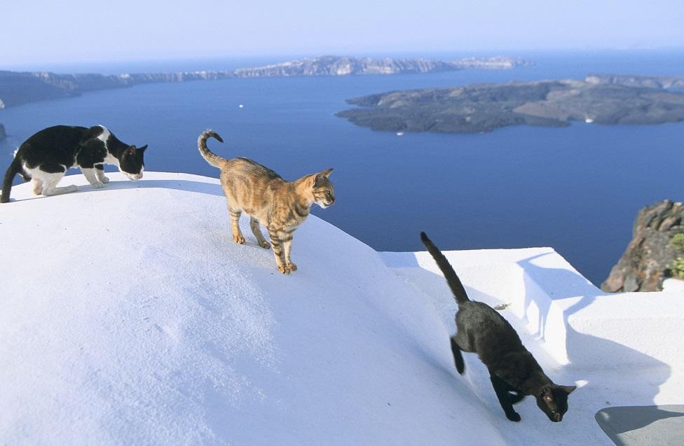 mačke u santoriniju