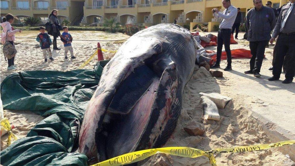 نفوق أحد الحيتان الضخمة قرب سواحل الاسكندرية