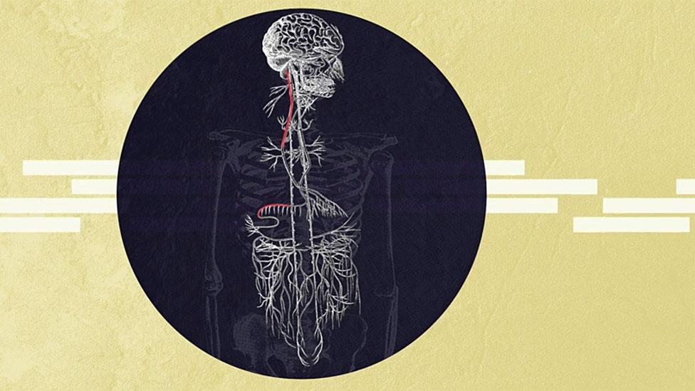 Dibujo mostrando el nervio vago