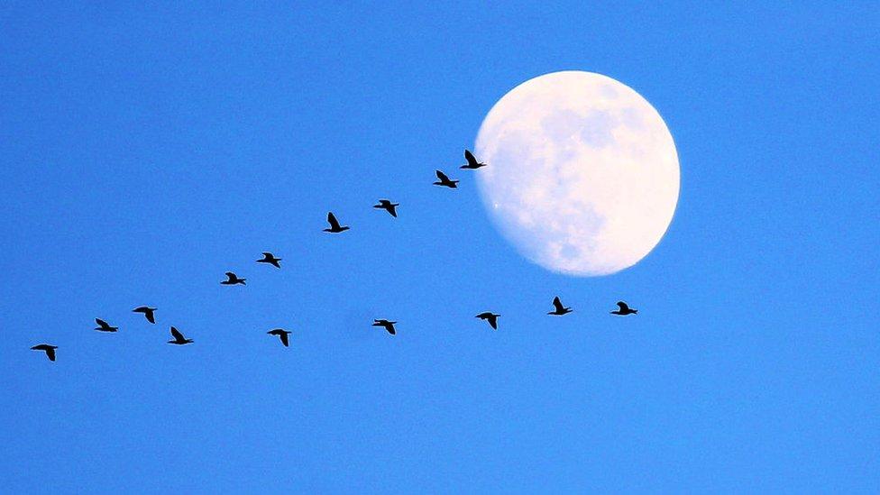 طيور تحلق في السماء في اصطفاف بديع
