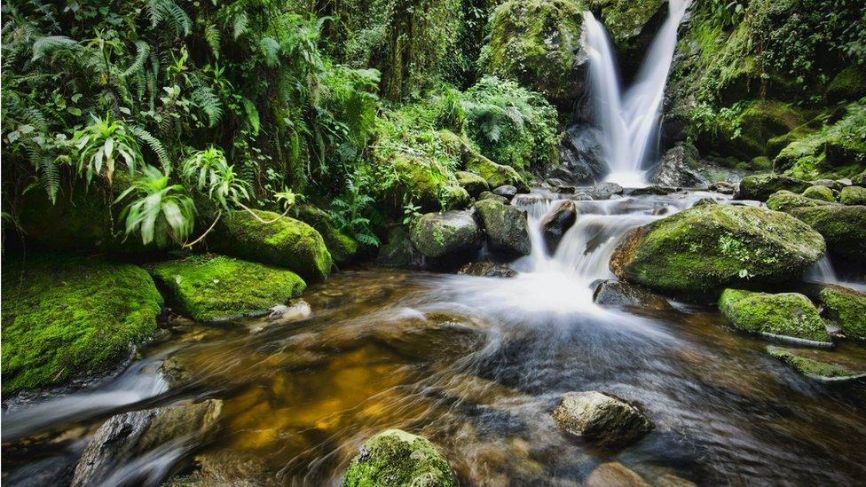 Vodopadi u Nacionalnom parku Rvenzori