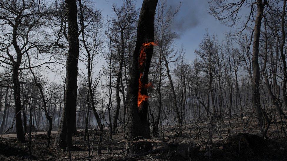 Zapaljeno drvo