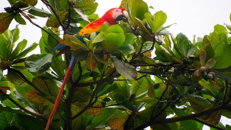 Guacamaya en un árbol
