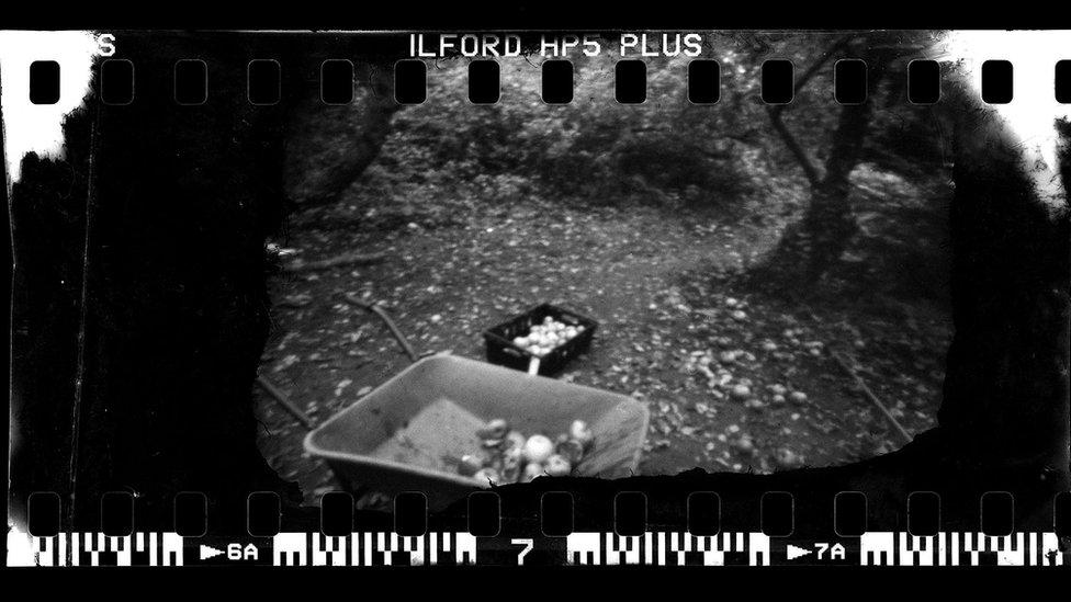 Apples in a wheelbarrow