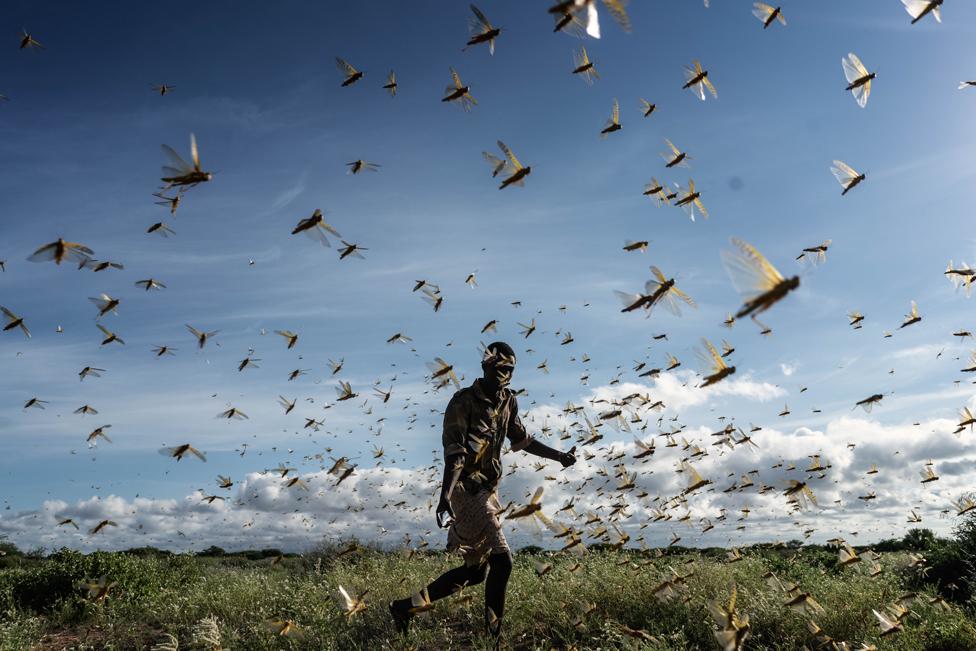 A man chases a swarm of desert locusts in Samburu County, Kenya, on 21 May 2020